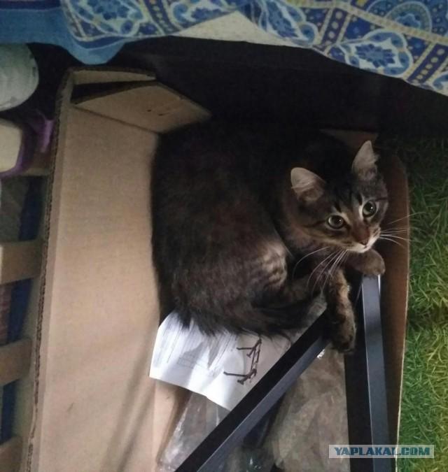 Кот-окулист хочет увидеть новый дом