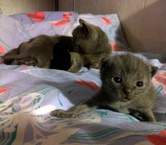 Плюшевые котята ищут хозяев!