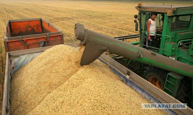 В России разрешили сеять ГМО-зерновые