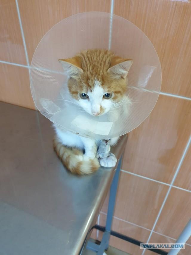 Котоленд. Котёнок без лапы в поисках счастья. 18+