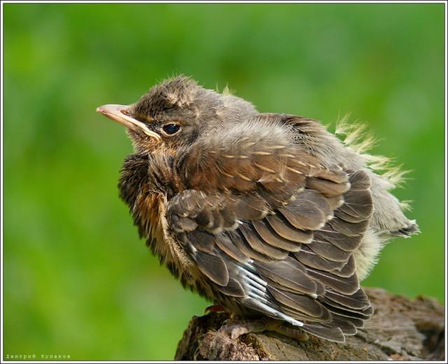 Экологи призывают не подбирать птенцов и бельчат с земли в парках