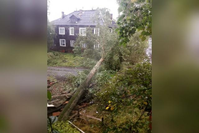Шторм в Архангельске и Северодвинске валит деревья, срывает крыши