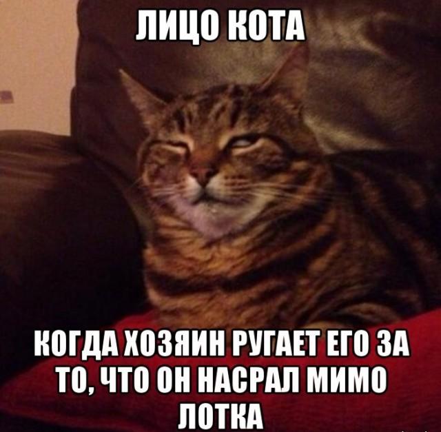 Из-за чего кот начал ходить мимо лотка