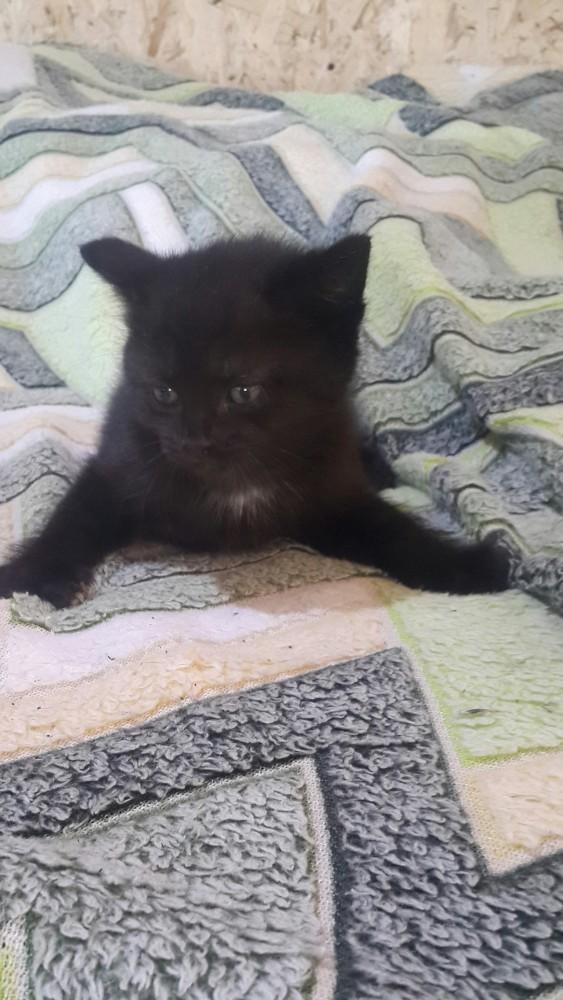 Черные шерстянные комочки!!!