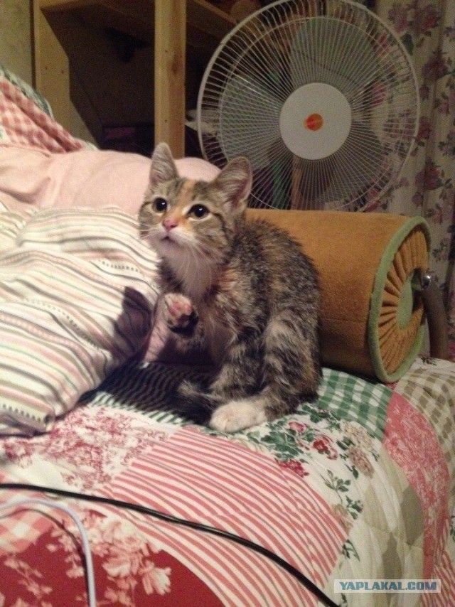 Котейка ищет теплый дом и заботливые руки