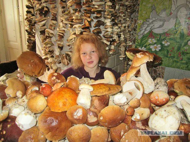 В Щучинском районе (Беларусь) семья за один день собрала около 200 кг грибов