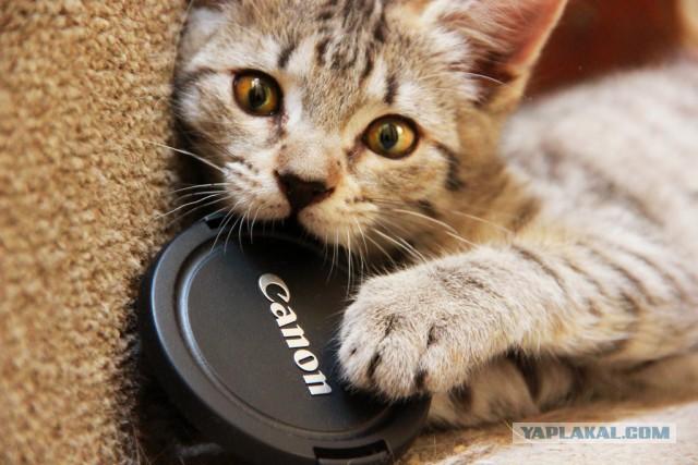 ПРОДАМ: Canon EOS 600D body с объективами+вспышко