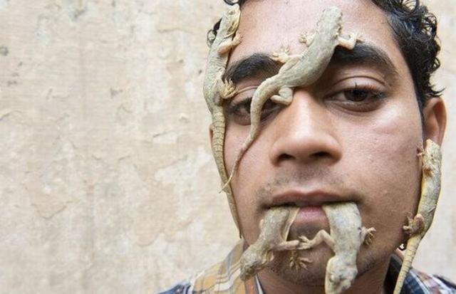 Индийский любитель ящериц