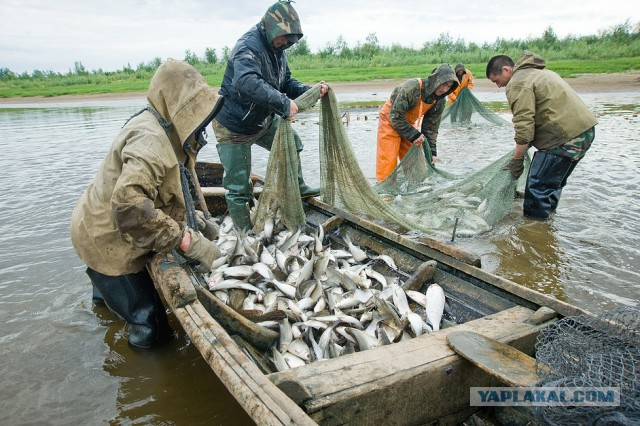 работа вахта север рыбалка