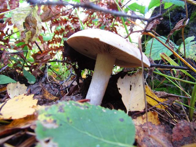 Последние тёплые дни, поход за грибами