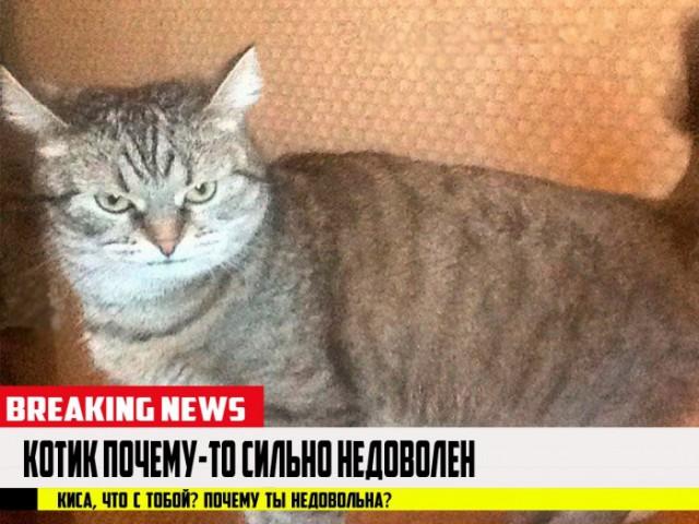 Молчание котят: депутаты решили запретить лаять и мяукать по ночам