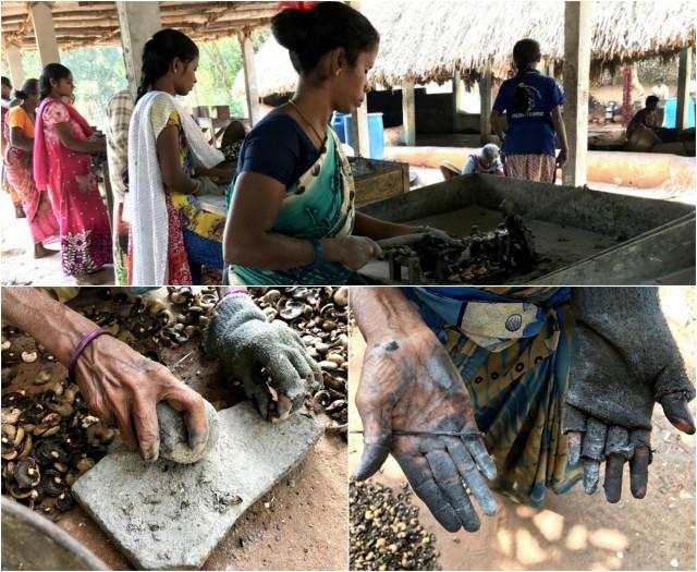 Индийские женщины платят сожженными руками за нашу любовь к кешью