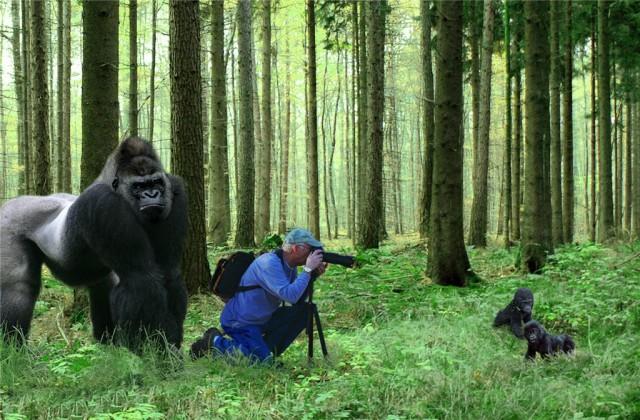 "Купил ""зеркалку"" - считай фотограф"