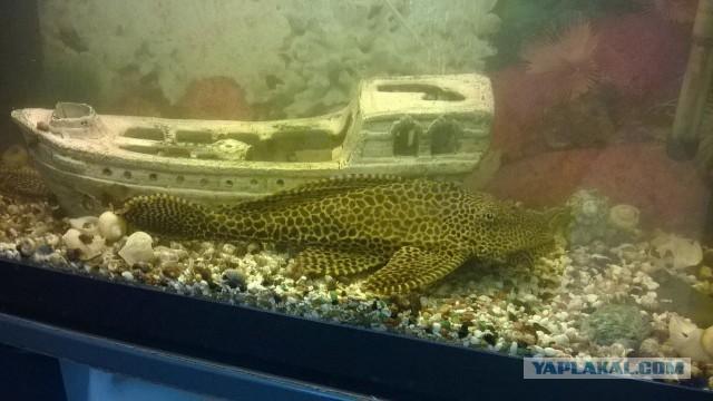 Продам аквариумных рыб.
