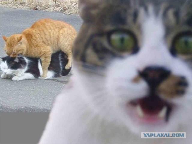 35 фотографий животных, глядя на которые невозможно не улыбнуться