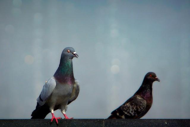 Причиной смерти трёх человек в Орле стал голубь