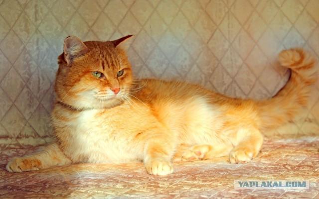 Екатеринбург и СО. Рыжий кот ищет дом