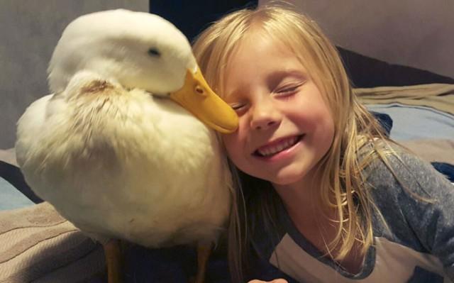 Пост милоты: малышка-девочка стала мамой для утки
