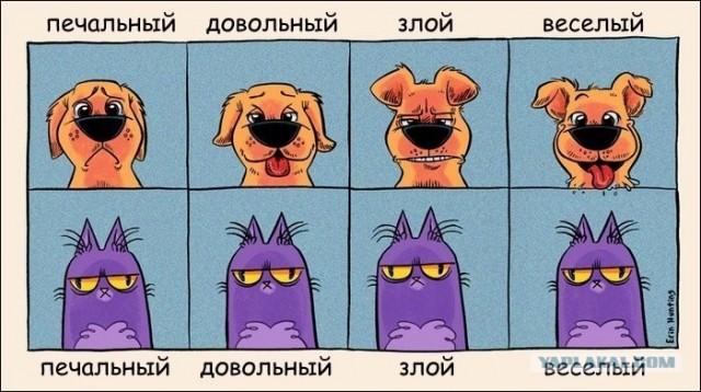Сравнение выражения эмоций собак и кошек