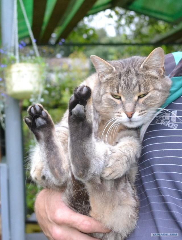 Кот ищет любящих друзей!
