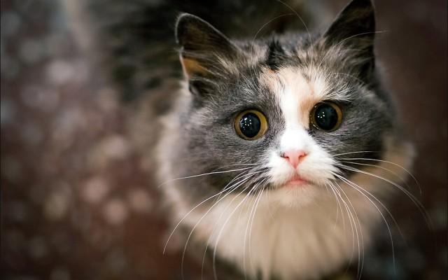 Депутат Мосгордумы предложила запретить кошек в котокафе