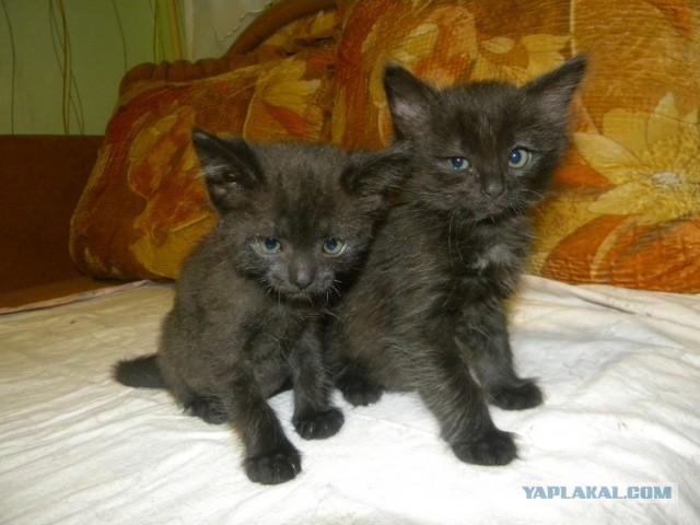 Спасение мохнатых малышей. Котята ищут своих хозяев.