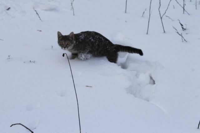 А вы уже открыли сезон кидания котов в снег?