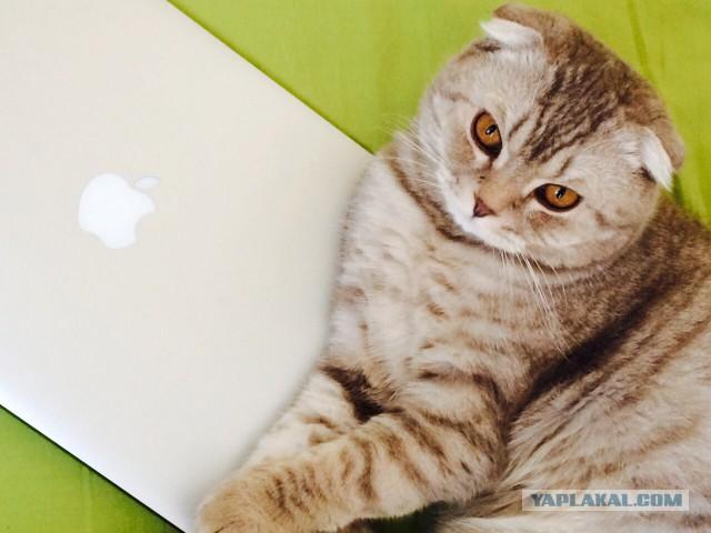 Отдам в добрые руки кота