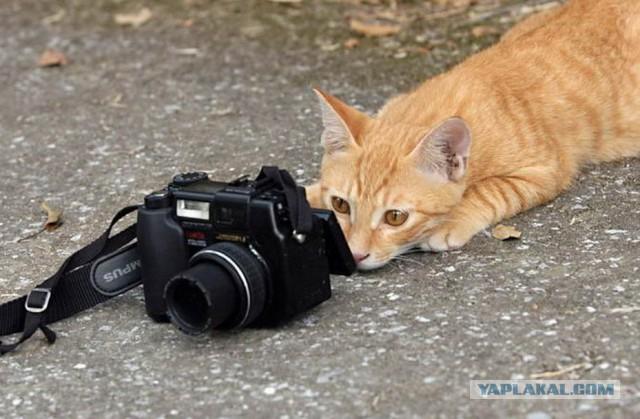 Нужен фотограф
