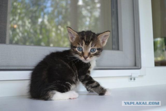 Котейки в подарок