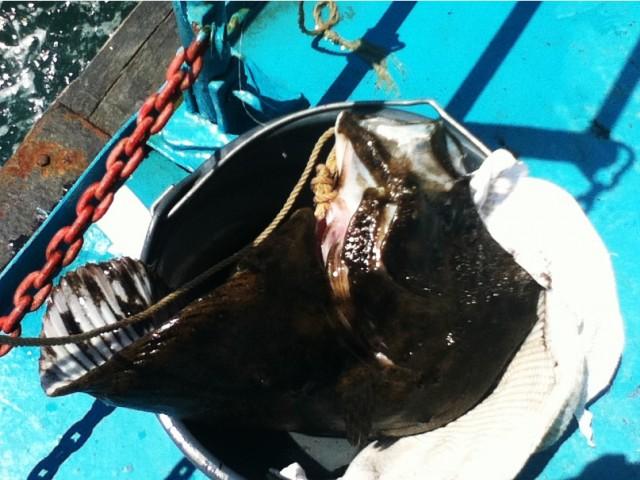 Sea Fishing. Черное море