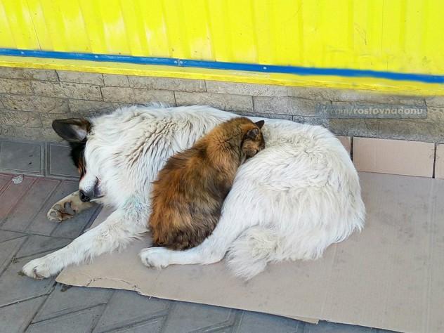 Бездомные кот и пес показали ростовчанам, что значит жить, «как кошка с собакой»