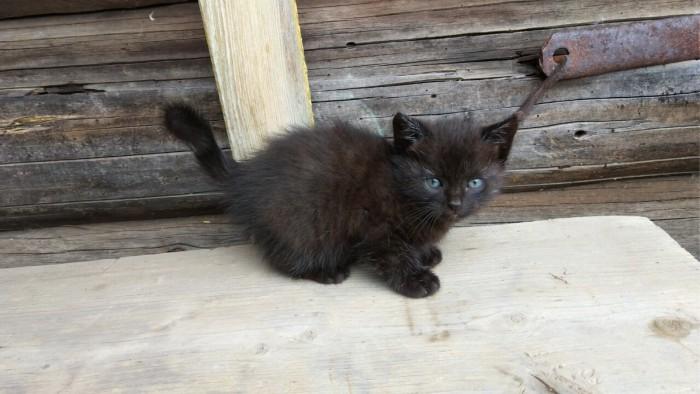 Отдам котёнка в хорошие руки! Пермь