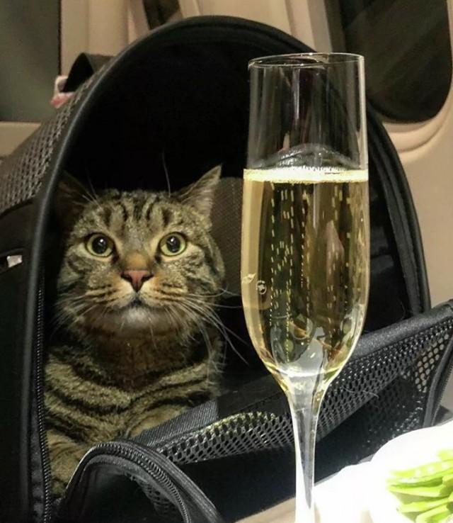 """Владелец толстого кота рассказал, почему нарушил правила """"Аэрофлота"""""""