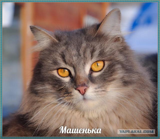 Красноярск! Шикарные кошки ищут дом!