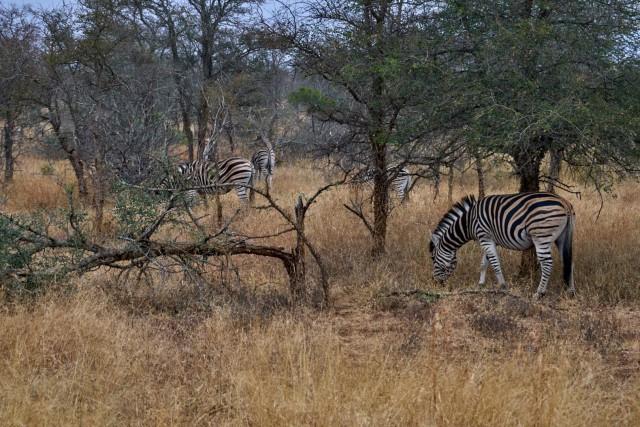 Небольшое путешествие по Южной Африке: ЮАР-Зимбабве-Замбия-Ботсвана