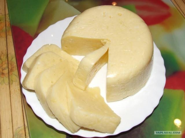 Быстрый рецепт домашнего сыра из молока