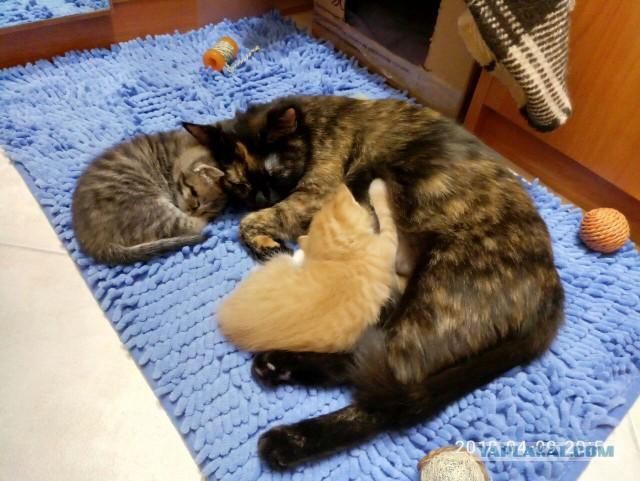 Отдадим двух котят