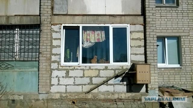 """Запиливание балкона, терем для котов и """"ежи""""."""