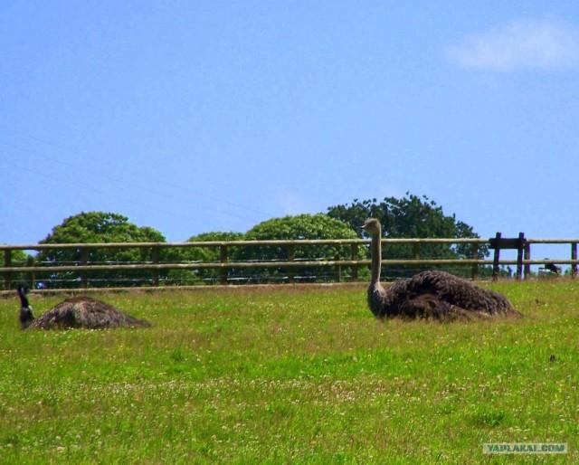 Парк дикой природы. Ирландия.