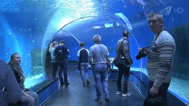 Приморский океанариум страдает от варварского поведения посетителей