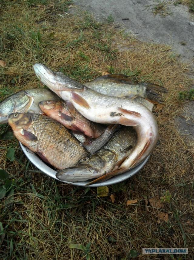 иваново рыболовный клуб