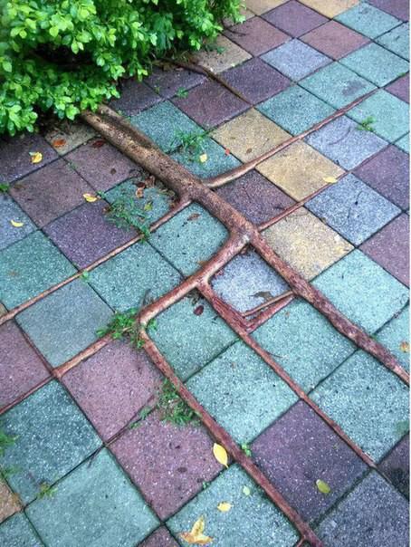 Квадратный корень выглядит вот так