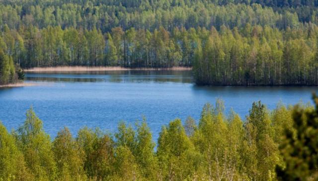 На Урале найден живым 4-летний мальчик, пропавший в лесу 10 июня