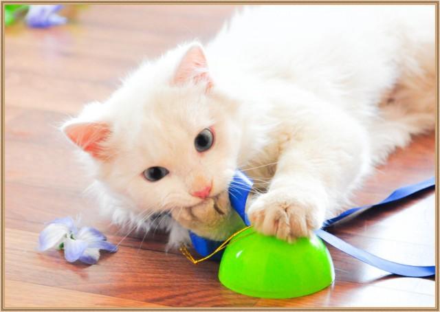 Красноярск. Глухой котик ищет дом.