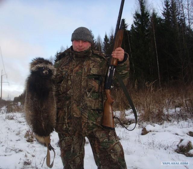 ловля енотовидная собака
