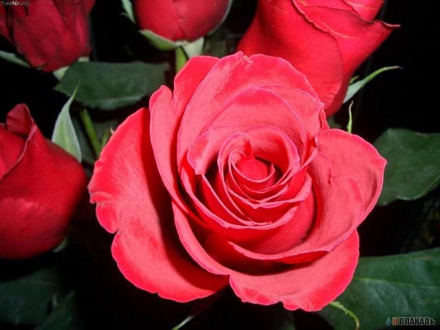 celebrity photo цветы № 123773