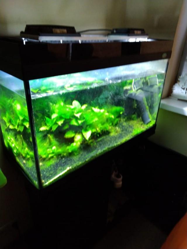 Отдам аквариум