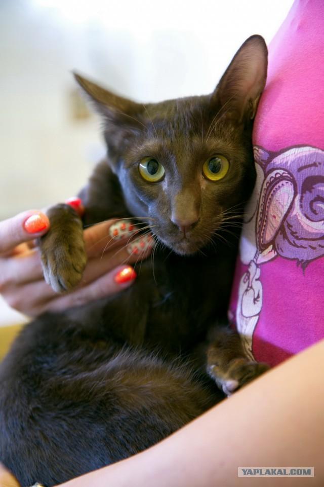Породистый ориентальный котик ищет новый дом((((