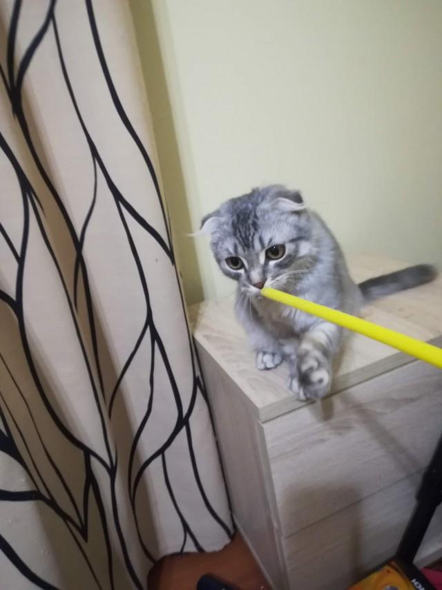 Отдам котика в хорошие руки (МСК)
